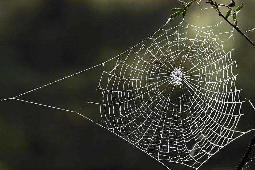 ... Kleinert Photography | Spider Web | Nature & Wildlife Photography: www.davidkphotography.com/?showimage=955