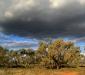 Boree landscape