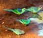 Binya birds