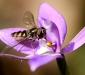 Fly on Orchid