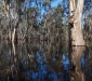 Gunbower Forest Flood
