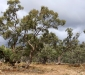 Gunbower Forest