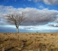 Dead tree on the plains