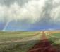 Rainbow Vineyard